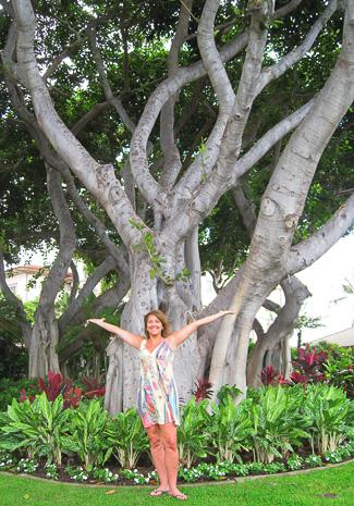 Joyful trees decorate the Marriott, joyful are we to enjoy them - Photo © Carl Amoth