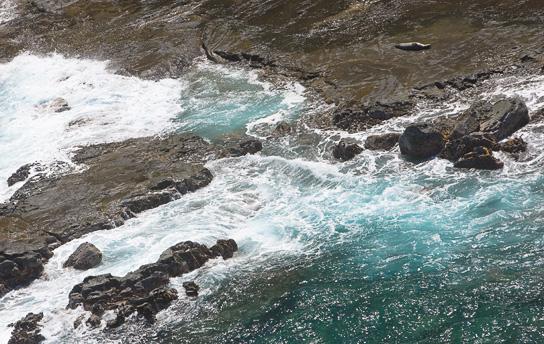 Lone seal basking on the edge of the surf near Hanalei, Kauai - Photo © Carl Amoth