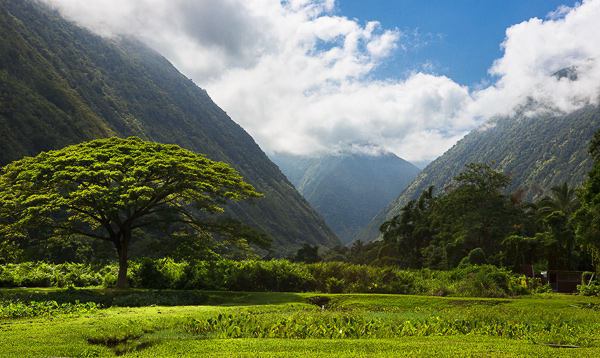 Waipiʻo Valley, Big Island, Hawaii. A sacred place for Hawaiians, it was also the capital and permanent residence of many early Hawaiian Kings. © Carl Amoth